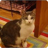 Adopt A Pet :: Sweetie Pie - Muncie, IN