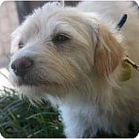 Adopt A Pet :: Jasper - Arlington, TX