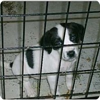 Adopt A Pet :: Bianca - Alexandria, VA
