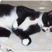 Adopt A Pet :: Dottie - Anchorage, AK