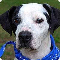 Adopt A Pet :: Arby - Mocksville, NC