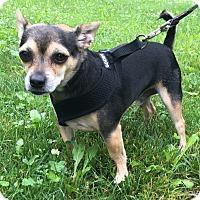 Adopt A Pet :: Ollie - Dayton, OH - Dayton, OH