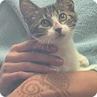 Adopt A Pet :: Clarence - Reston, VA
