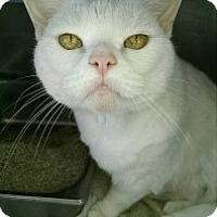 Adopt A Pet :: Babette - Saginaw, MI
