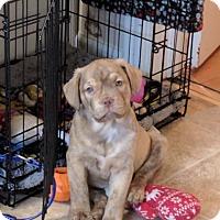Adopt A Pet :: Princess Leia (The Star Wars Clan) - Hanover, PA