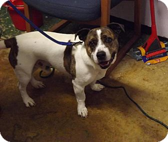 Beagle/Basset Hound Mix Dog for adoption in Waverly, Ohio - Lucky