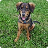 Adopt A Pet :: Medic - New Oxford, PA