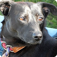 Adopt A Pet :: Lisa - Long Beach, NY