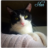 Adopt A Pet :: Star (COURTESY POST) - Baltimore, MD