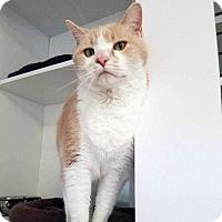 Adopt A Pet :: Oakley - Arlington/Ft Worth, TX