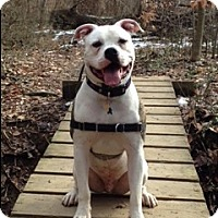 Adopt A Pet :: Odin - Baltimore, MD