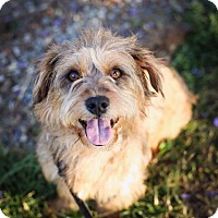 Adopt A Pet :: Tommy Pickles - San Diego, CA