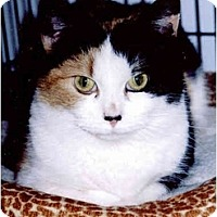 Adopt A Pet :: Christy - Medway, MA