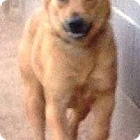 Adopt A Pet :: Dixie - Gilbert, AZ