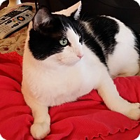Adopt A Pet :: Bobby - Palmdale, CA
