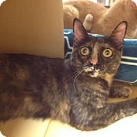 Adopt A Pet :: Betty - Scottsdale, AZ