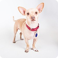 Adopt A Pet :: Enrique - Atlanta, GA
