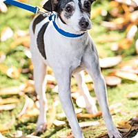 Adopt A Pet :: Licorice - Pitt Meadows, BC