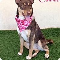 Adopt A Pet :: Camilla - San Diego, CA