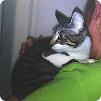 Adopt A Pet :: Nikki - Pensacola, FL