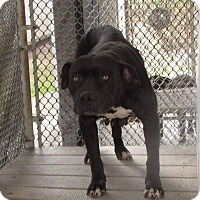 Adopt A Pet :: Snookie - Covington, TN