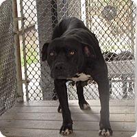 Adopt A Pet :: Snookie - Covington, TN