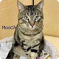 Adopt A Pet :: Mooch - Foothill Ranch, CA