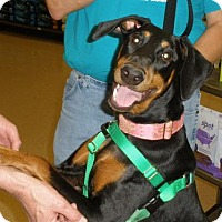 Adopt A Pet :: June Bug - Omaha, NE