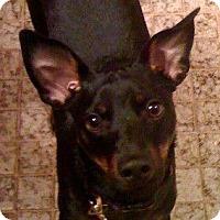 Adopt A Pet :: Wendell - maryville, TN