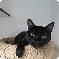 Adopt A Pet :: Sissy - Laguna Woods, CA