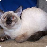 Adopt A Pet :: K-Ellie1-Rainbow - Colorado Springs, CO