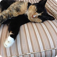 Adopt A Pet :: LUCKY - Madison, AL
