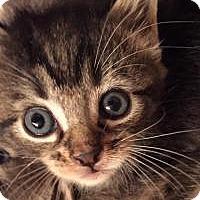 Adopt A Pet :: Marley - Reston, VA