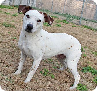 Hound (Unknown Type) Mix Dog for adoption in Savannah, Tennessee - Edee