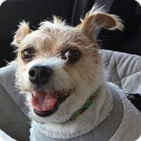 Adopt A Pet :: Paloma - Burbank, CA