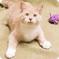 Adopt A Pet :: Malibu - Chicago, IL