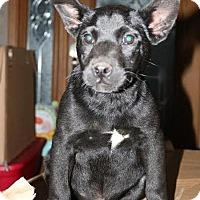 Adopt A Pet :: Willie Nelson - Brattleboro, VT