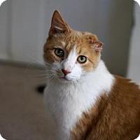 Adopt A Pet :: Beans - St. Paul, MN