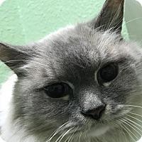 Adopt A Pet :: Mister - Auburn, CA