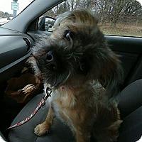 Adopt A Pet :: Toby - Rockford, IL