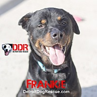 Adopt A Pet :: Frankie - St. Clair Shores, MI
