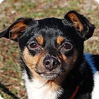 Adopt A Pet :: Tibbet - Carmel, IN