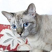 Adopt A Pet :: Minouche - Naples, FL