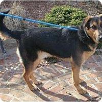 Adopt A Pet :: ReggiePENDING - Toronto/Etobicoke/GTA, ON