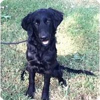 Adopt A Pet :: Lindy - Adamsville, TN