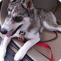 Adopt A Pet :: Whiskey Aspen Video - Houston, TX