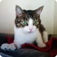 Adopt A Pet :: Ana - Santa Monica, CA
