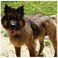 Adopt A Pet :: Sarki - Forked River, NJ