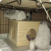 Adopt A Pet :: Tic and Tock - Avondale, LA