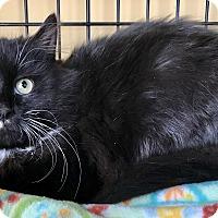 Adopt A Pet :: Gina - Island Park, NY